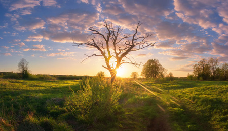Summer nature landscape at sunrise. Beautiful sunrays through old tree on meadow. Rural landscape with amazing colorful sky Stok Fotoğraf