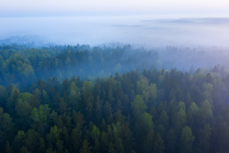 Foggy morning forest aerial view. Top view green forest in mist. Autumn background