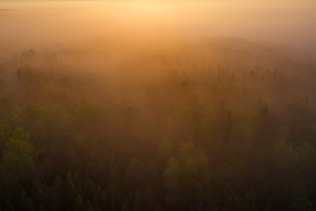 Bright sunrise over misty forest aerial view. Foggy forest at sunrise top view. Forest nature landscape with fog in sunlight from above