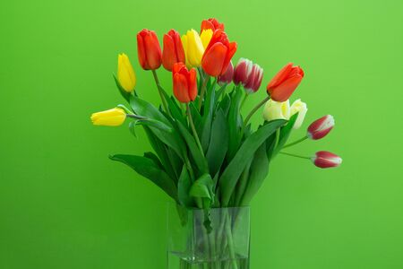 Still life with a bouquet of yellow tulips in front of a green wall. 版權商用圖片