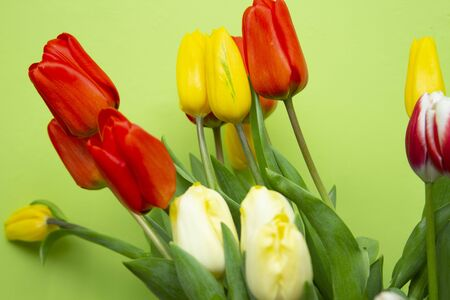 Still life with a bouquet of yellow and red tulips in front of a green wall. 版權商用圖片