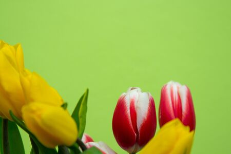 Still life with a bouquet of yellow tulips in front of a green wall. 免版税图像