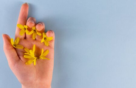 Fashion and skin care hands and yellow flowers in the hands of women. Creative photo of beauty hands on a blue background.copyspace for text