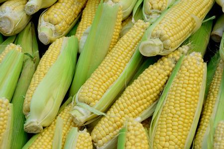 Fresh sweet corn from city market of Birmingham