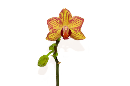 Beautiful orchid on the white background