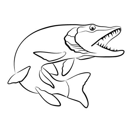 vecteur de poisson Pike isolé sur fond blanc