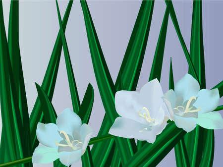 Campanula. Bell flowers Ilustração