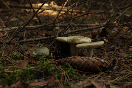 Varied mushrooms in the wild forest