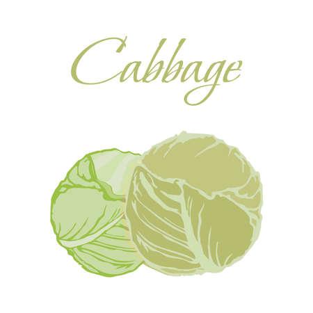 Illustration of Tasty Veggies. Cabbage Isolated on White Background