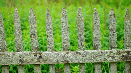 enclosing: Old mossy fence Stock Photo