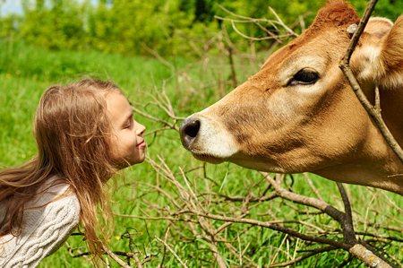 Smiling girl of ten is going to kiss a nice cow