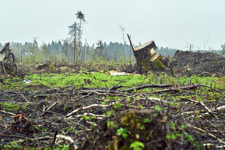 Low angle view of the field with felled trees