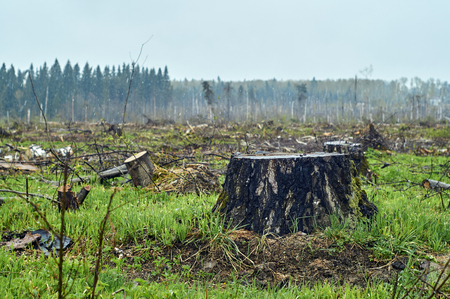 Consequences of deforestration