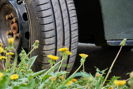 Car wheel standing on the green grass with yellow dandelions. Suitable for tire service and traveling.