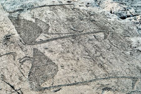 Petroglyphs ancient engravings depicting geese on the stone plates of Onega lake shore Banco de Imagens