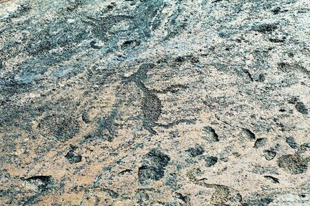Ancient engravings petroglyphs depicting animals on the stone plates of Onega lake shore