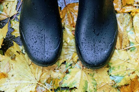 Black rubber boots standing on asphalt road covered with fallen maple leaves