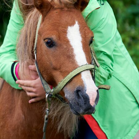 Head of an young pony colt in the arms of a teenage girl outdoors close up