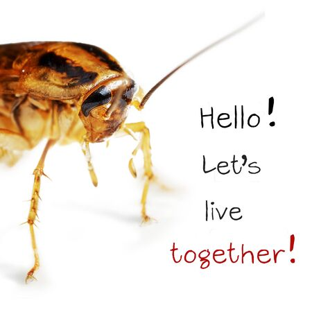 Macro photo of the front part of an adult red cockroach alive isolated on the white background with the words Hello! Let's live together! Infecting the house with cockroaches concept 写真素材 - 131919481