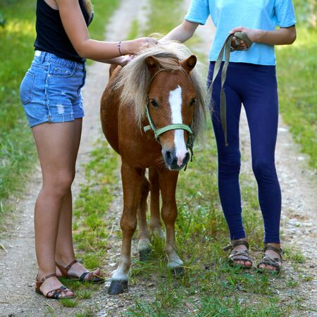 Teenage girls standing with a pony colt on a country road Stock Photo - 135187239