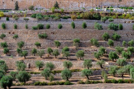 Terraces of the Kidron Valley in the Old City in Jerusalem Фото со стока