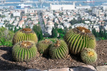 Cactuses on the foreground with Bahai Temple and Haifa panorama on the blurred background , Israel.