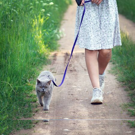 Teen girl in a dress leads a british short hair cat on a leash along a countrty road at countryside in sunny summer day