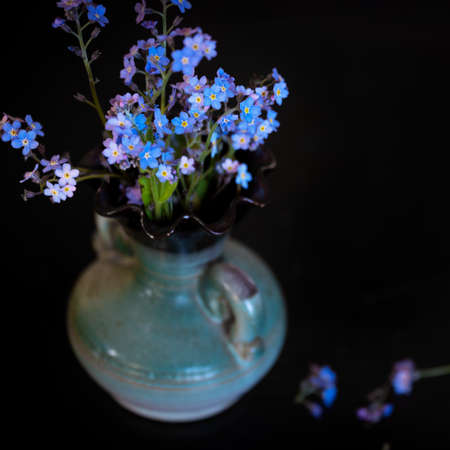 Forget-me-nots flowers blooming in vase on the dark table Фото со стока