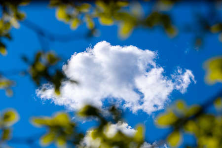 Tree leaves against white clouds on the Blue Sky.