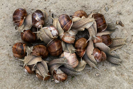 Large group of snails outdoors view from above