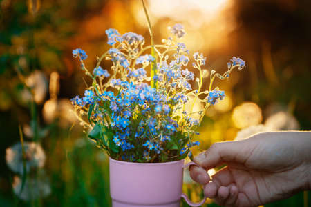 Girls hand holds a cup with a bouquet of forget-me-not flowers in the spring garden illuminated by the rays of the setting sun