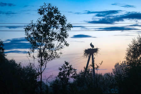 Family of storks in the nest on the power pole at night