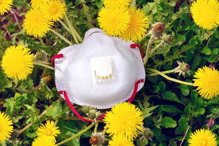 Protective respirator lies on the green grass among blooming yellow dandelions outdoors. The concept of protection from spring allergies or viruses