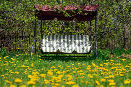Garden swing standing on the backyard overgrowing with blossoming dandelions Stock Photo
