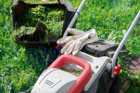 Lawn mower with protective gloves and a grass container full of trimmed grass in the garden