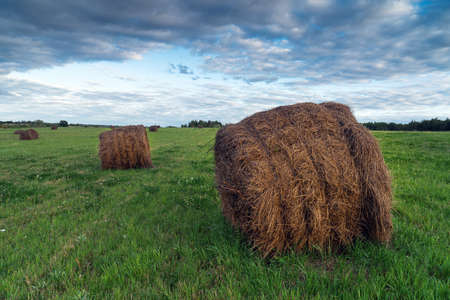 Hay bales on the green meadow in summer evening Stock Photo