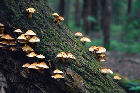 Small mushrooms grow on a tree trunk in the summer forest