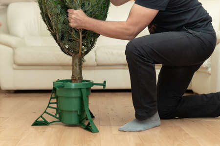 Man installing a Christmas tree in a plastic stand at home in New Year eve