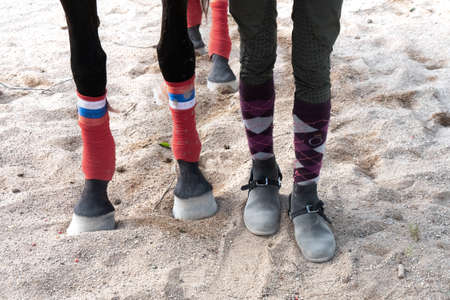 Horse and human feet stand on the sand of a hippodrome. Comparison of human and horse legs. Фото со стока