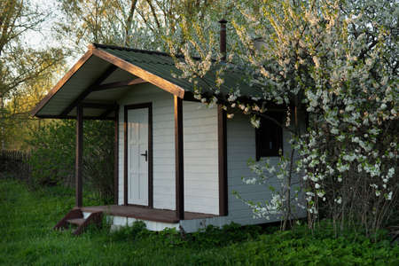 Small wooden cottage with blossoming cherry or plum tree in spring evening outdoors