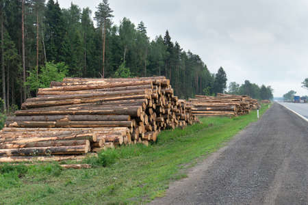 Logs are piled up on the side of the highway near Moscow in the summer