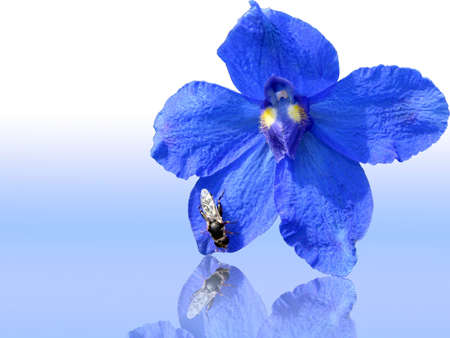 Blue flower with a fly close up
