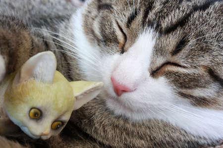 Portrait sleeping cat with a souvenir-kitten  Stock Photo
