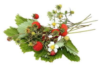 Bunch of wood wild strawberry