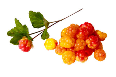 Hill of cloudberries with a branch isolated on a white background