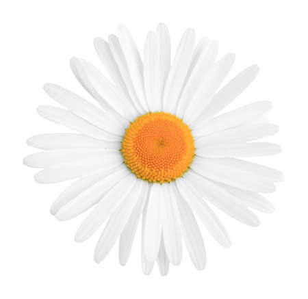 Daisy close up isolated on a white background Stock Photo