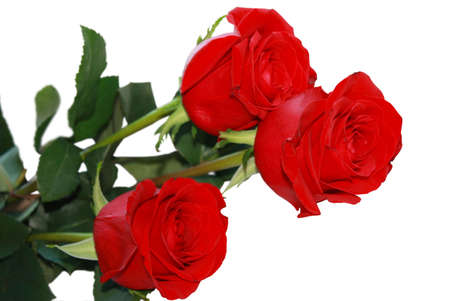 Three red roses isolated on a white background