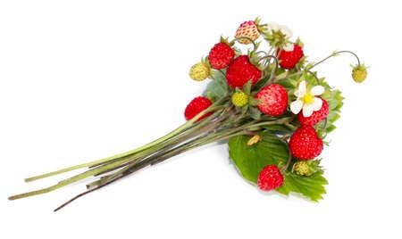 Bunch of ripe wild strawberry  photo