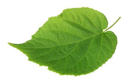 The big green leaf of kiwi