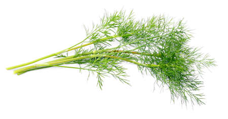 Branch of young dill  Stock Photo